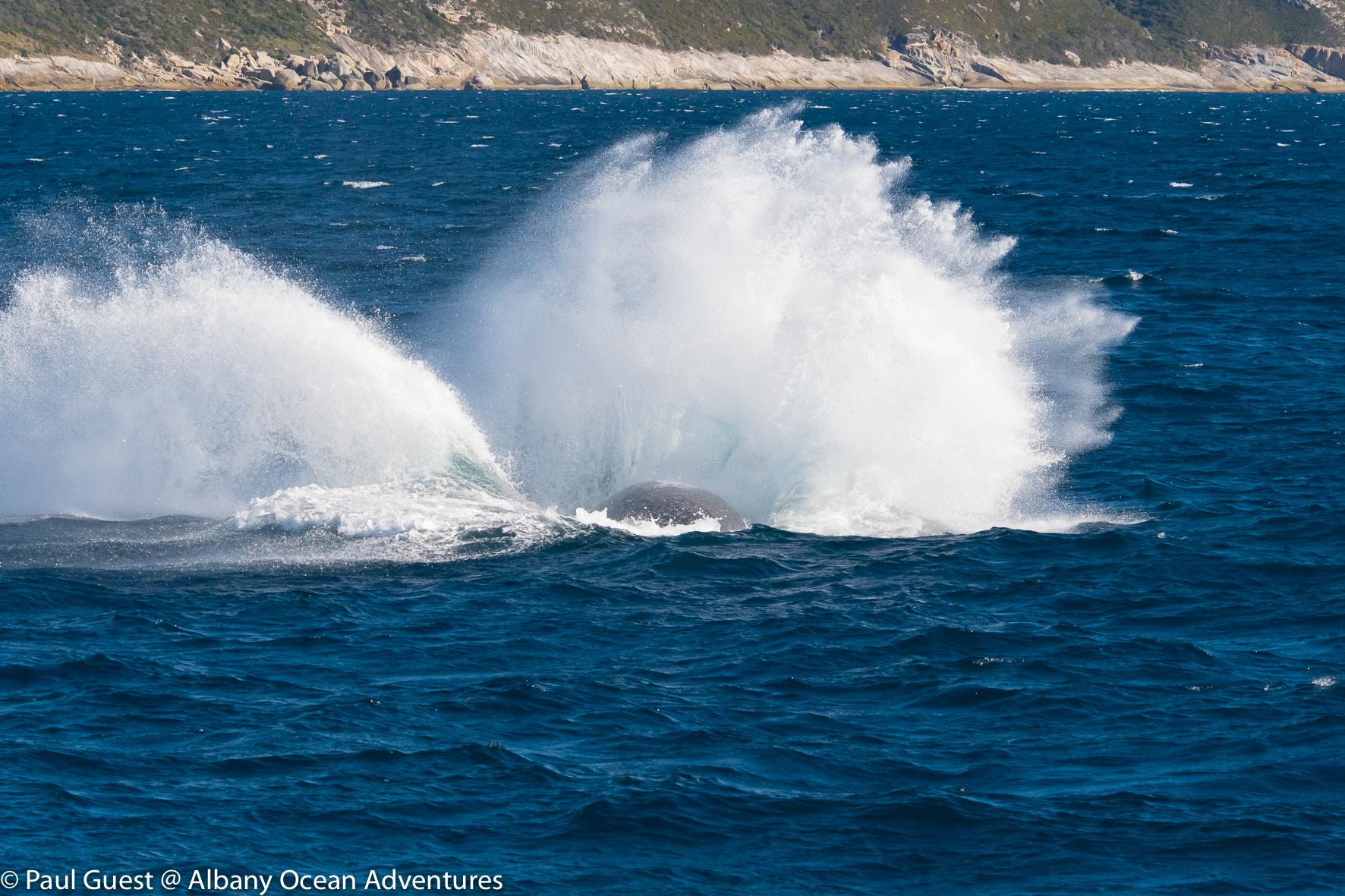 Humpback Whale-2019-07-17-243