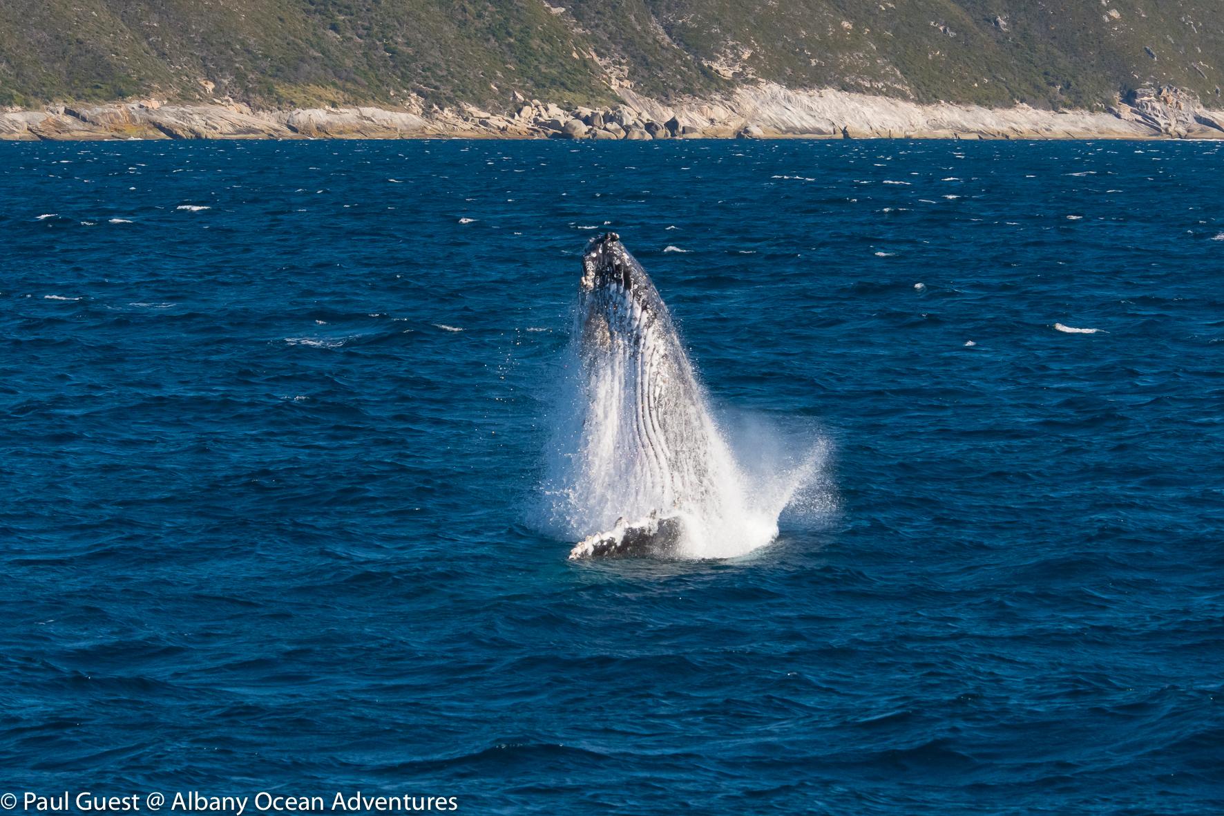 Humpback Whale-2019-07-17-226