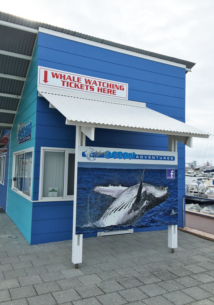 Make a whale watching booking here