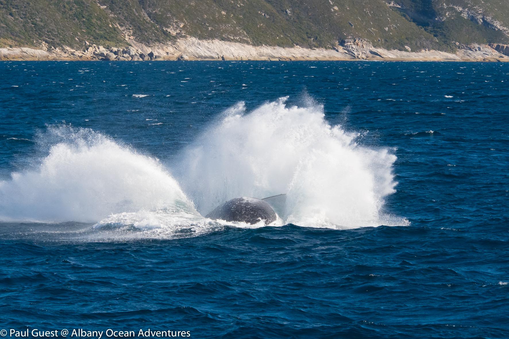 Humpback Whale-2019-07-17-242