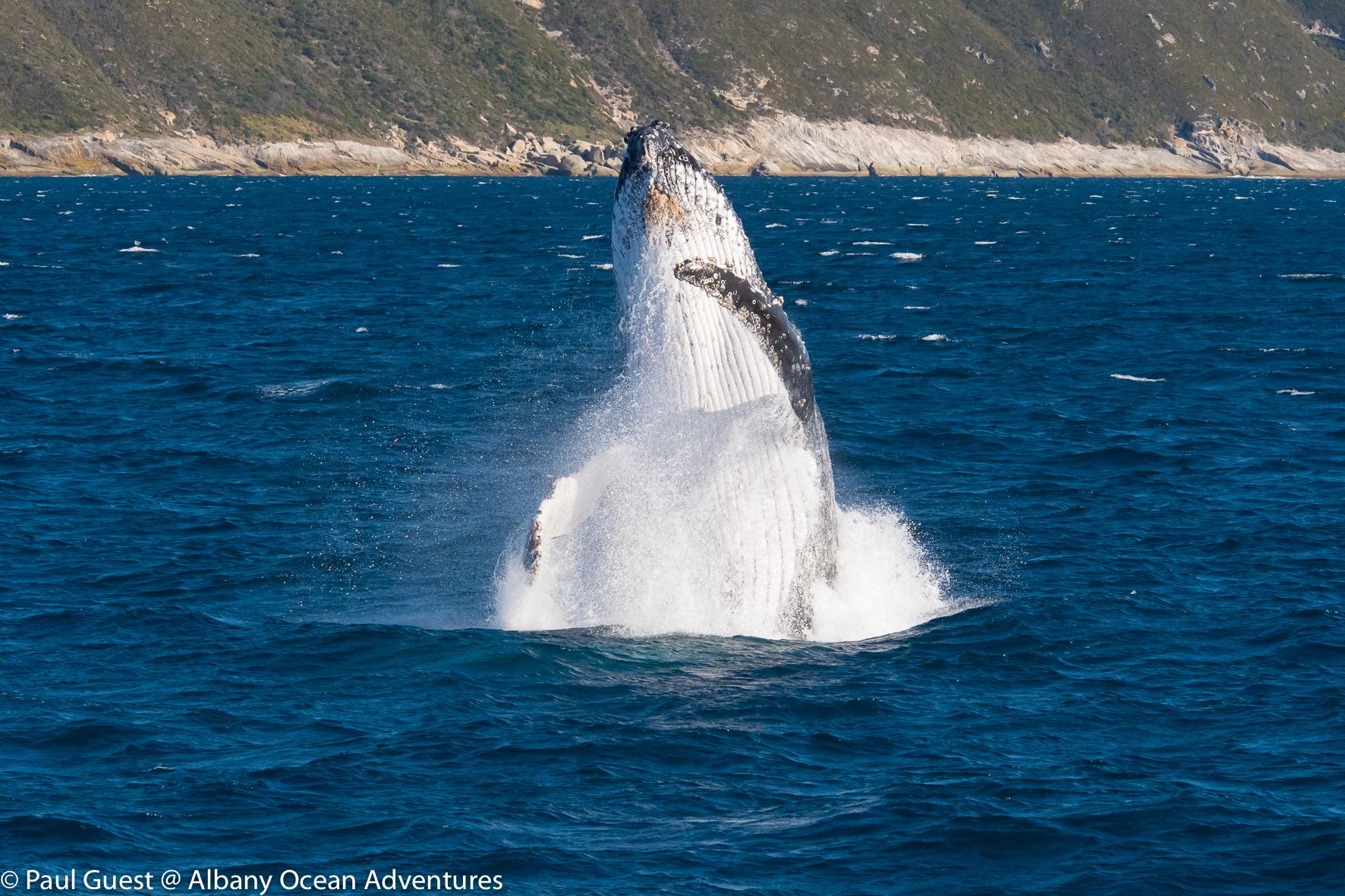 Humpback Whale-2019-07-17-231