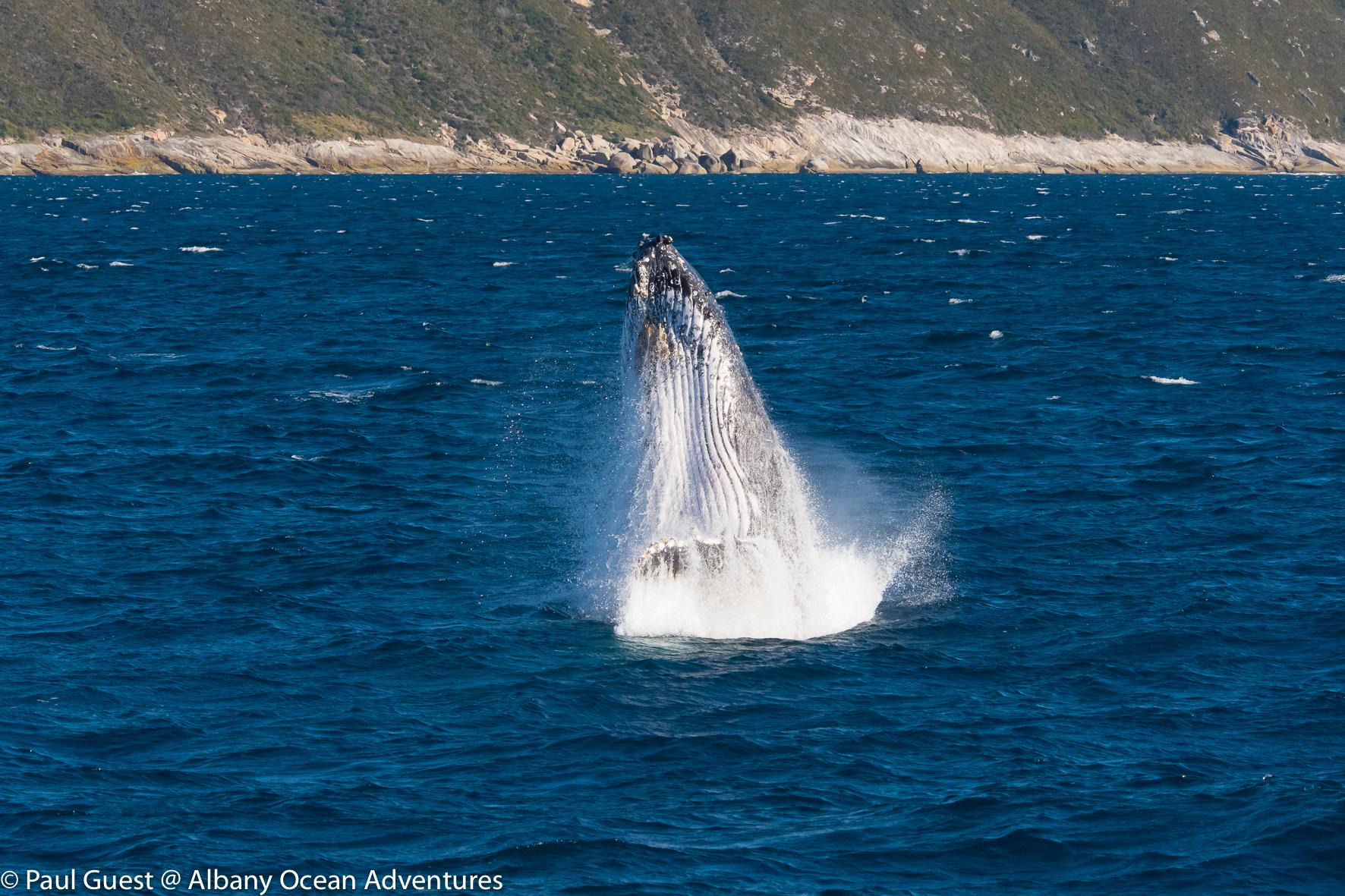 Humpback Whale-2019-07-17-227