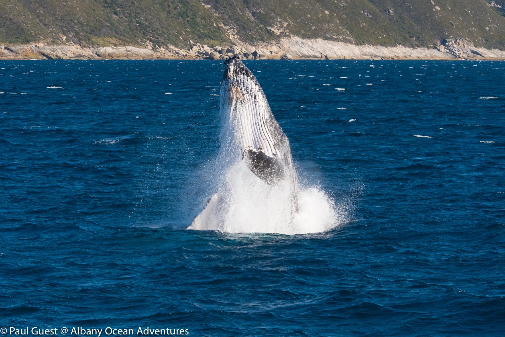 Humpback Whale-2019-07-17-229