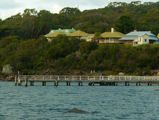 8 Metre Humpback in Princess Royal Harbour