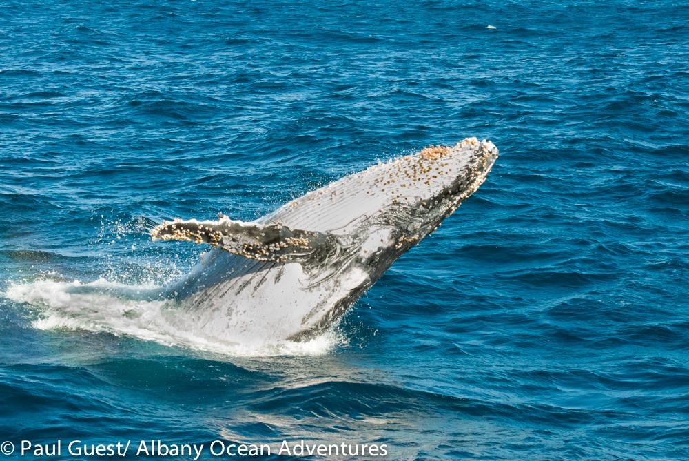 Humpbacks 15-06-12