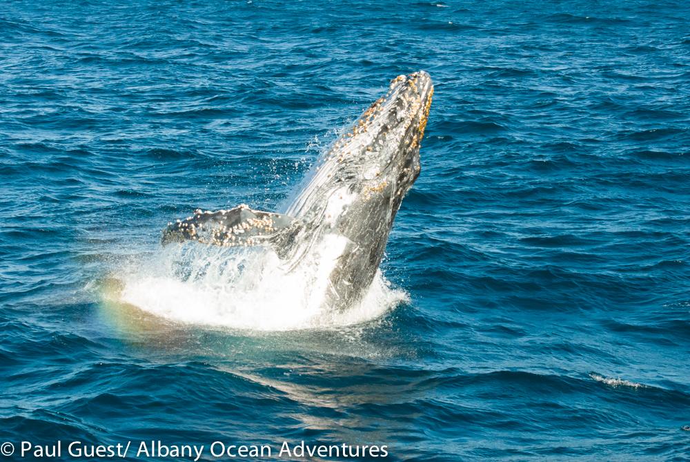 Humpbacks 15-06-10
