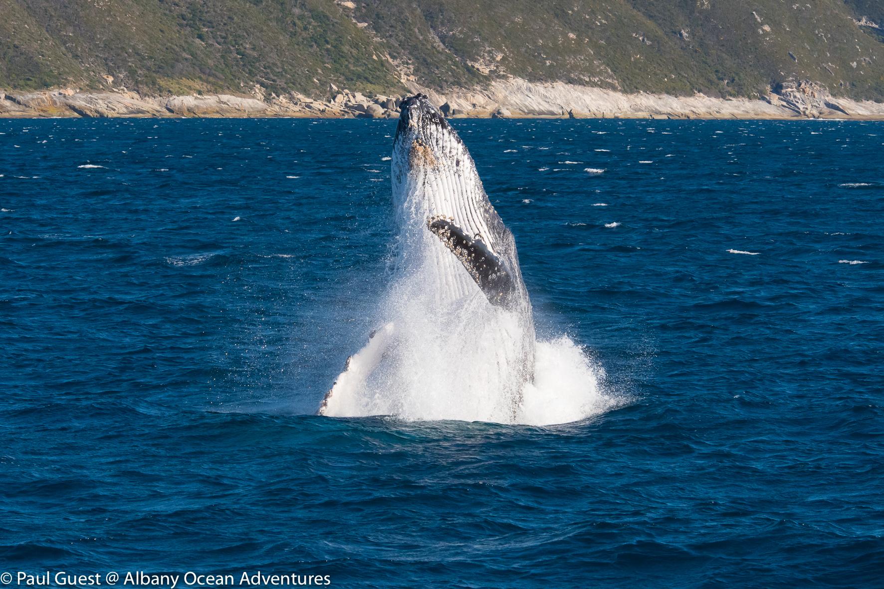 Humpback Whale-2019-07-17-230