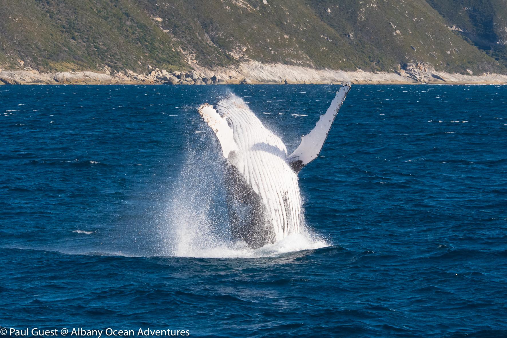 Humpback Whale-2019-07-17-235