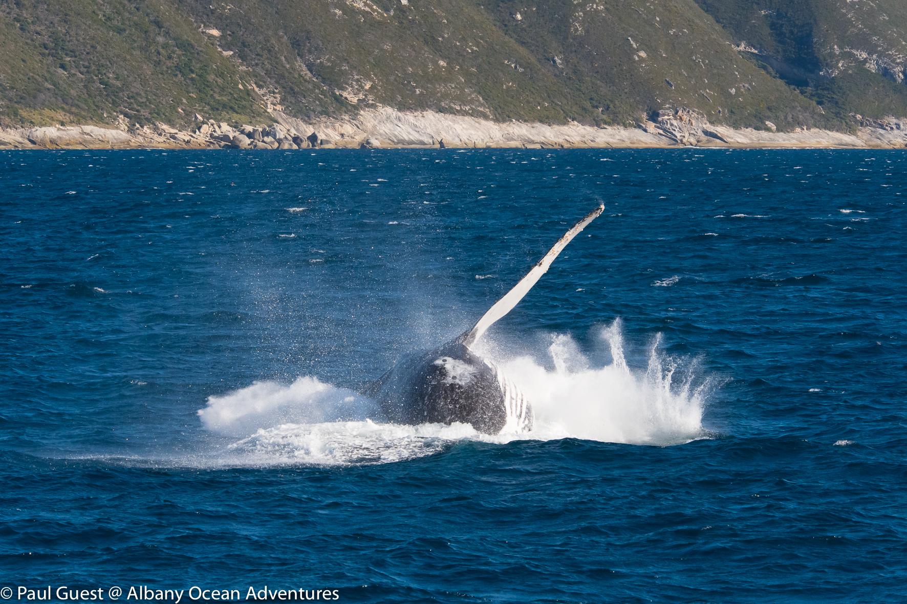 Humpback Whale-2019-07-17-240