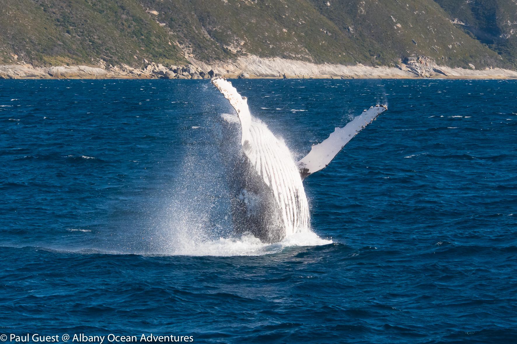 Humpback Whale-2019-07-17-236