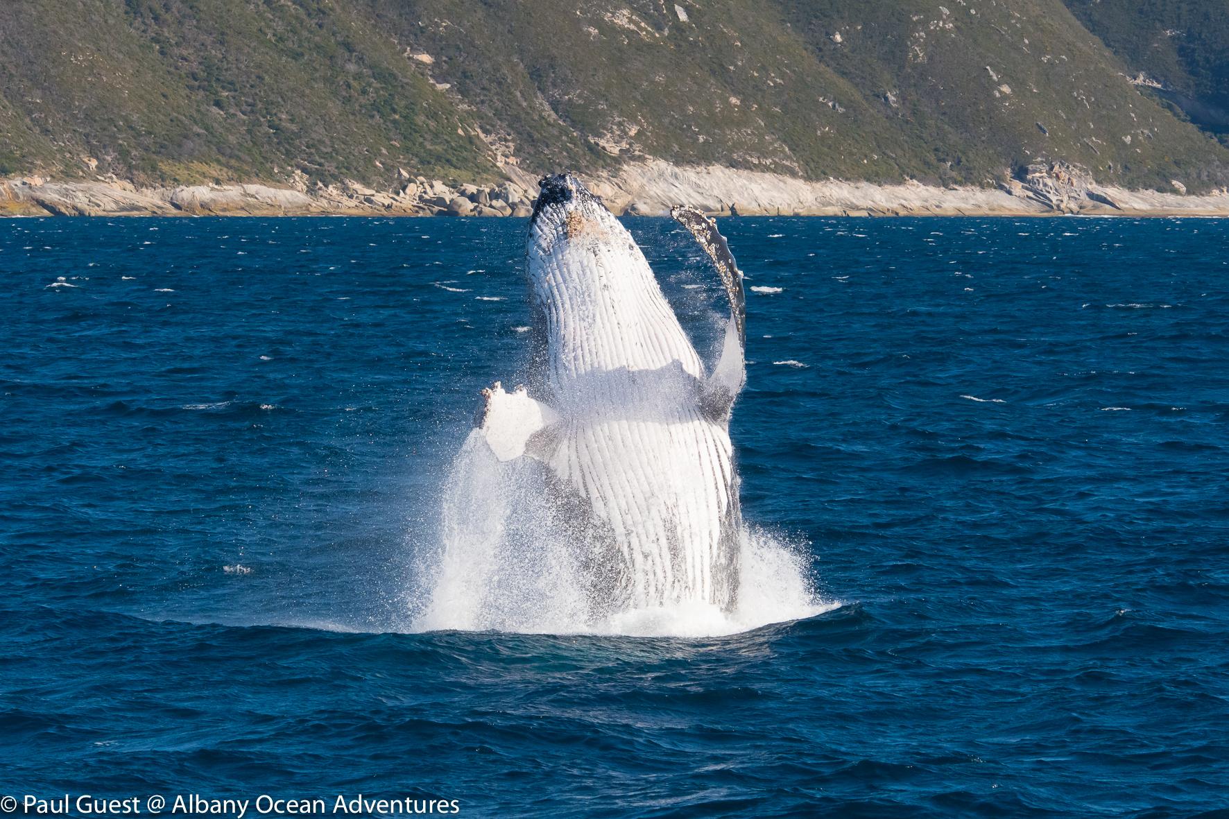 Humpback Whale-2019-07-17-233