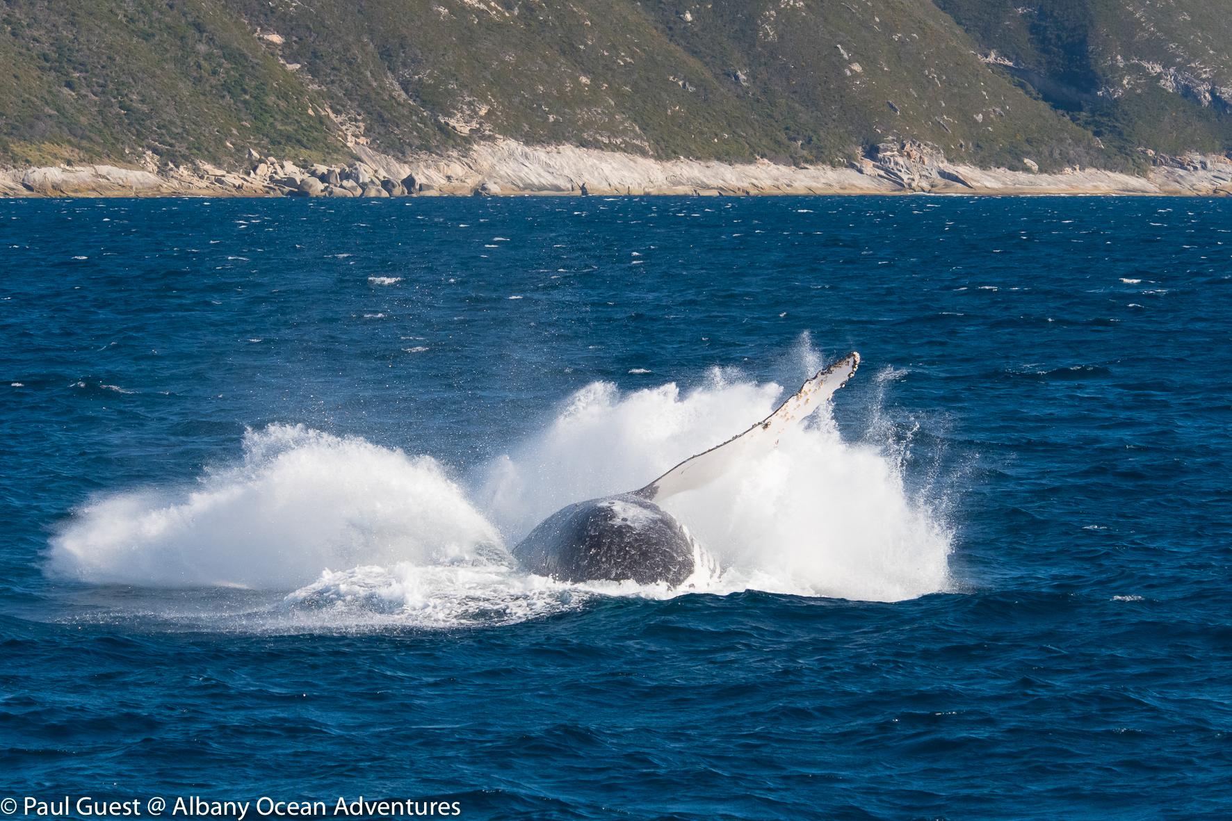 Humpback Whale-2019-07-17-241