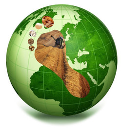 Globe cereal footprint