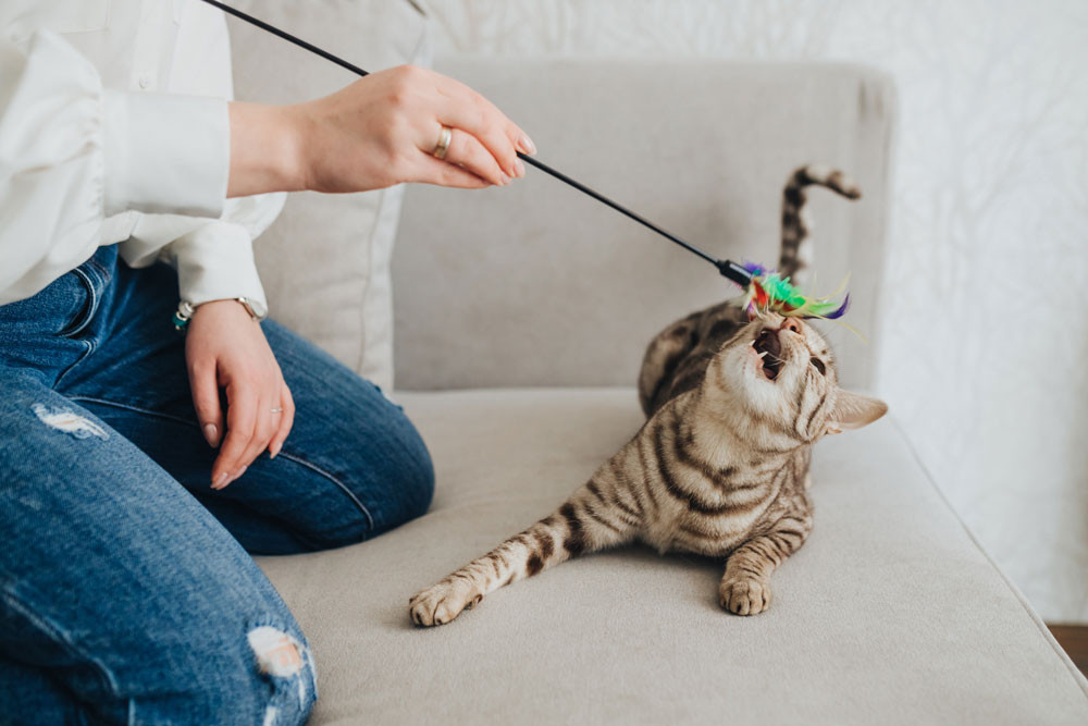 Entertaining your cat at home. How to keep your cat happy and healthy