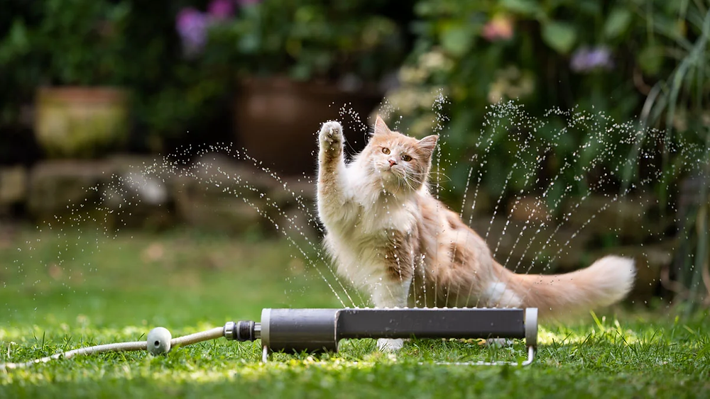 Overheating Treatment in Dogs and Cats