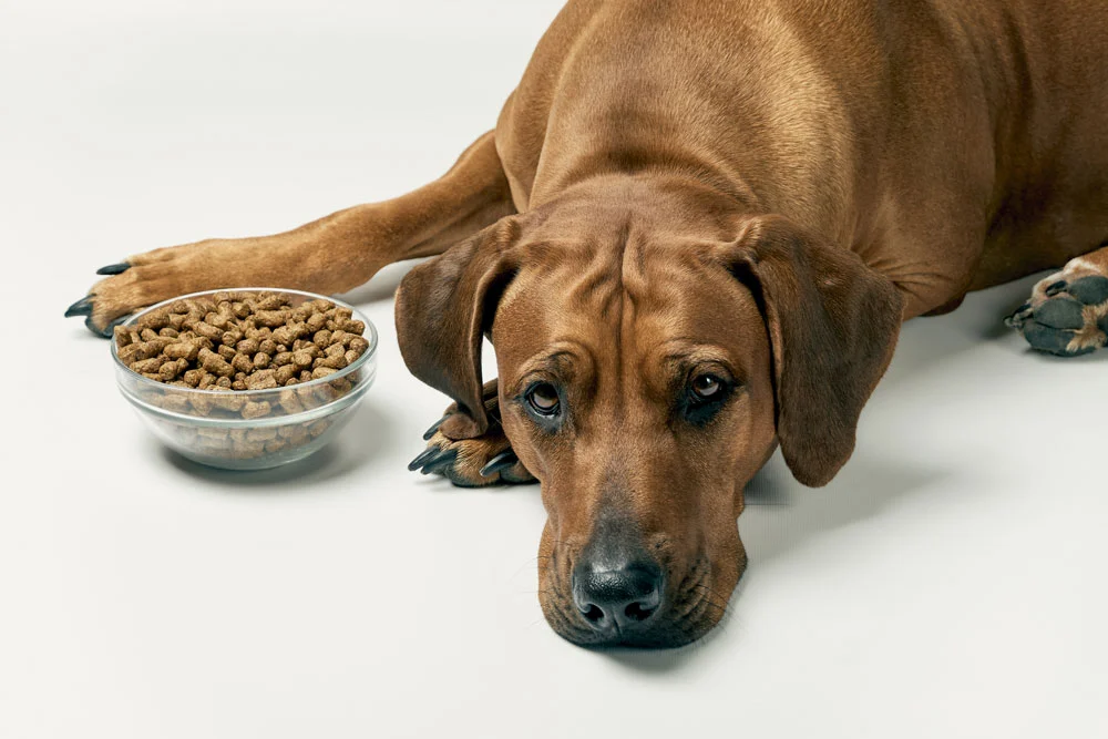 Myth #4: Raw Food Will Make My Dog Sick Because of Bacteria, Parasites, and Pathogens.