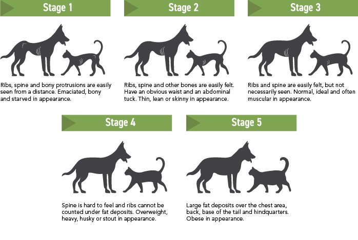 Body Condition Scoring chart for dogs and cats.