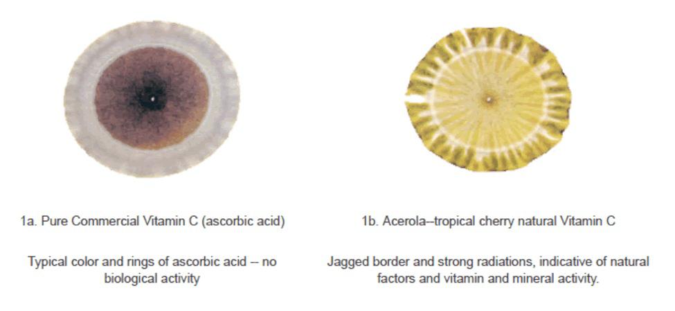 Pure form vitamin C Ascorbic Acid vs Acerola Natural Vitamin C