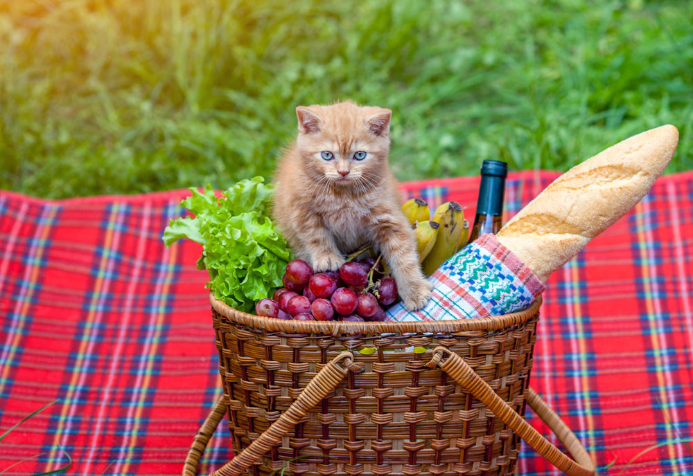 8 Socially Distanced Summer Activities To Enjoy With Your Dogs or Cats    5. Beach or Park Picnics
