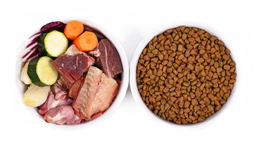 How To Transition Your Dog Or Cat To A Raw Food Diet: 10 Easy Steps