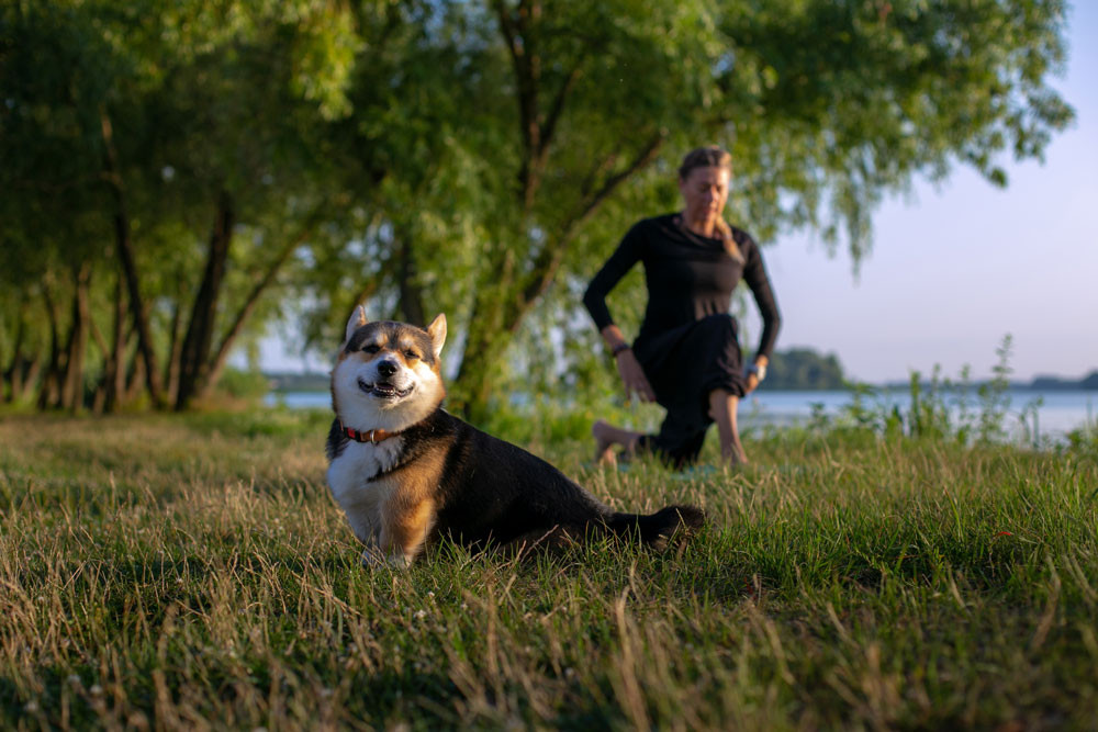Summer Safety Tips For Your Pet. What you should do before any activities