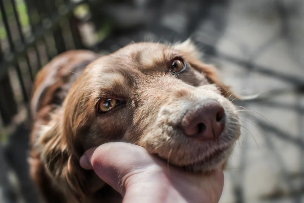 Assessing Why Your Dog Is Vomiting, How Often Does Your Dog Throw Up?