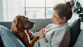 7 Ways To Assess Your Pet's Health At Home