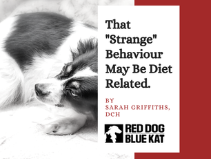 Diet Related Behavioural Issues in Pets