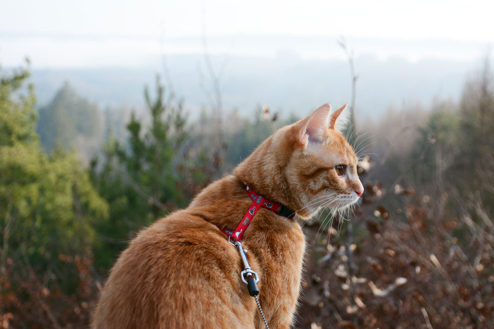 8 Socially Distanced Summer Activities To Enjoy With Your Dogs or Cats   1. Hiking - Did you know you can train your cat on a leash?
