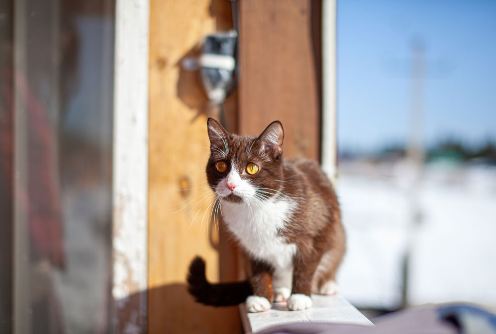 Cat enjoying fresh air outside on a balcony. How to keep your cat happy