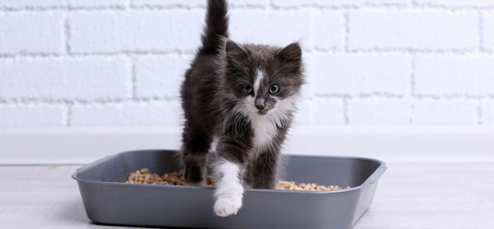 Is My Cat Constipated? 6 Most Common Causes & Solutions