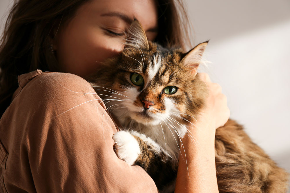 5. Food Safety   6 Reasons Why Your Cat May Be Vomiting   Red Dog Blue Kat