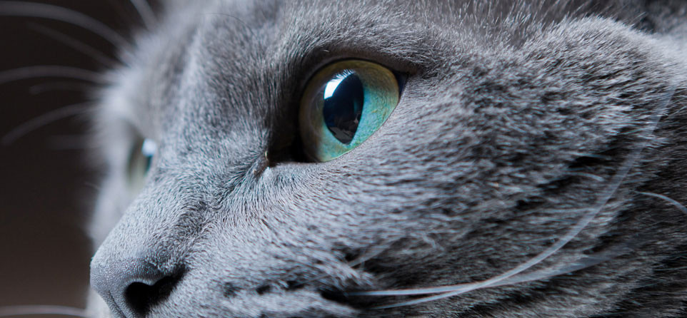 How to tell if your pets healthy. Check their eyes