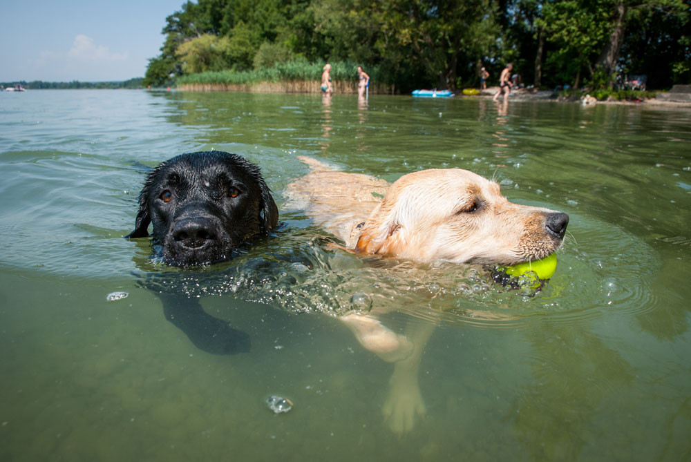 8 Socially Distanced Summer Activities To Enjoy With Your Dogs or Cats    Swimming