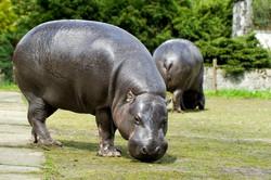 גן החיות בקרקוב
