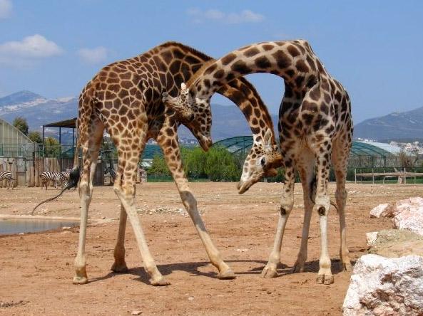 גן החיות אתיקה