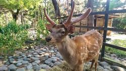 גן החיות בטביליסי