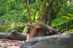 גן החיות בברונקס