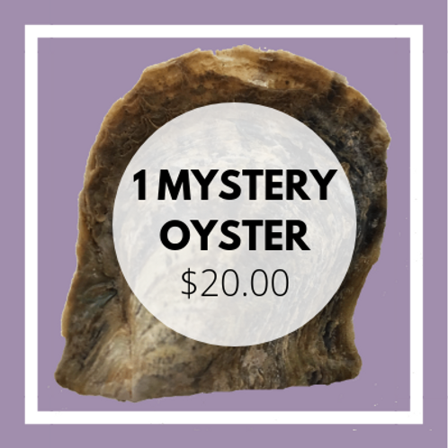 MYSTERY OYSTER