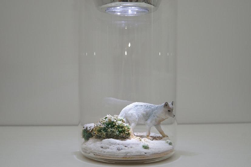 מנורת לילה - זאב לבן