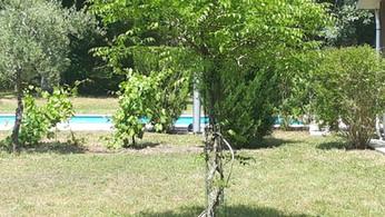 Le jardin et la petite vigne...