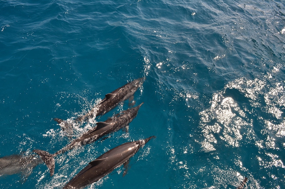 a-family-of-bottlenose-dolphins-4384680.