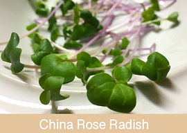 china rose radish, microgreens, ibiza