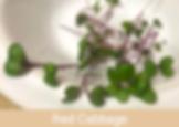 red cabbage, microgreens, ibiza