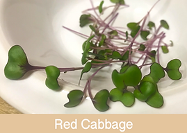 red cabbage, microgreens, ibiza