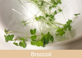 broccoli, microgreens, ibiza