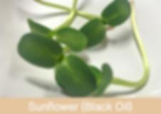 Skärmavbild 2019-04-26 kl. 01.57.52.png