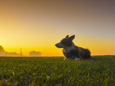 Meditation and Dog Training