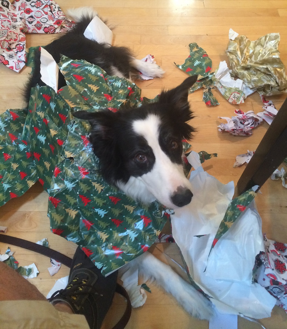 Border collie christmas wrapping paper
