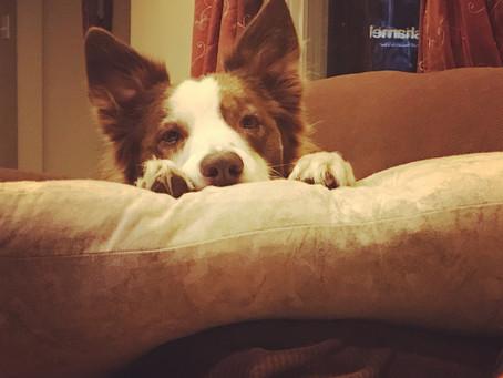 The Four-Hour Dog